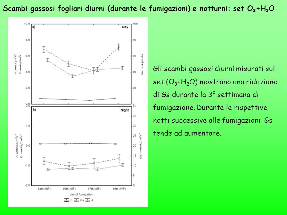 Scambi gassosi fogliari diurni (durante le fumigazioni) e notturni: set O3+H2O