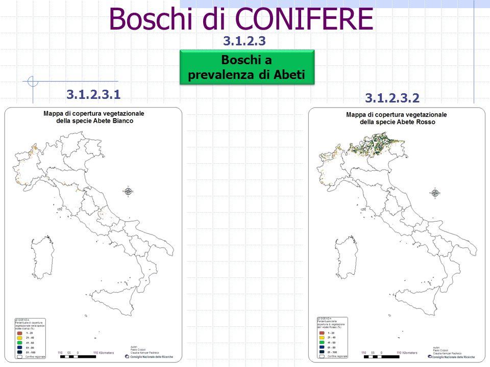 Boschi di CONIFERE 3.1.2.3 Boschi a prevalenza di Abeti 3.1.2.3.1