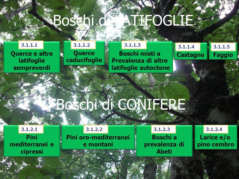 Boschi di LATIFOGLIE Boschi di CONIFERE 3.1.1.1