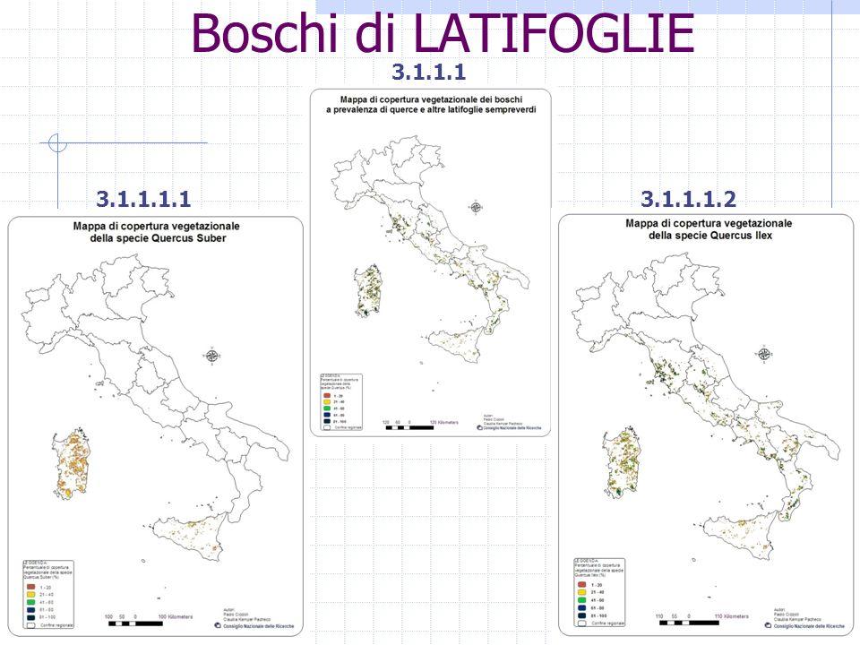 Boschi di LATIFOGLIE 3.1.1.1 3.1.1.1.1 3.1.1.1.2