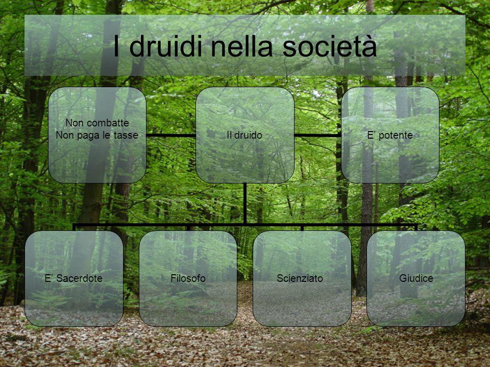 I druidi nella società