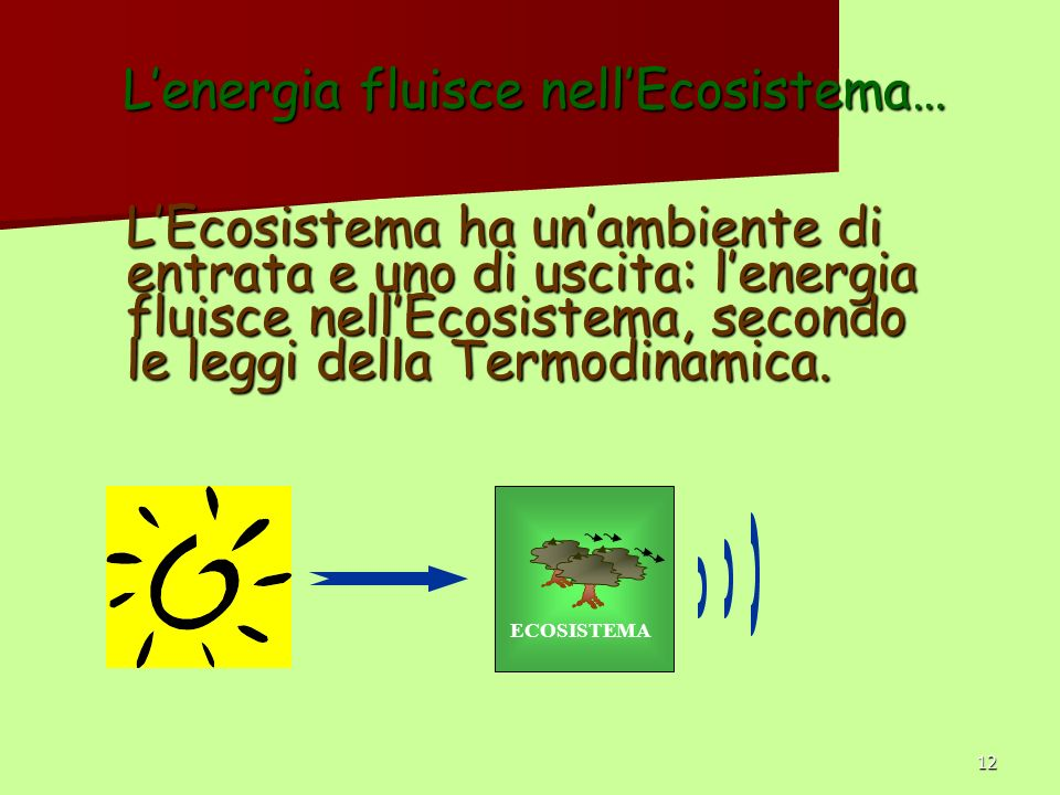 L'energia fluisce nell'Ecosistema…