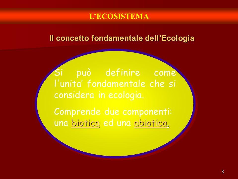 Il concetto fondamentale dell'Ecologia
