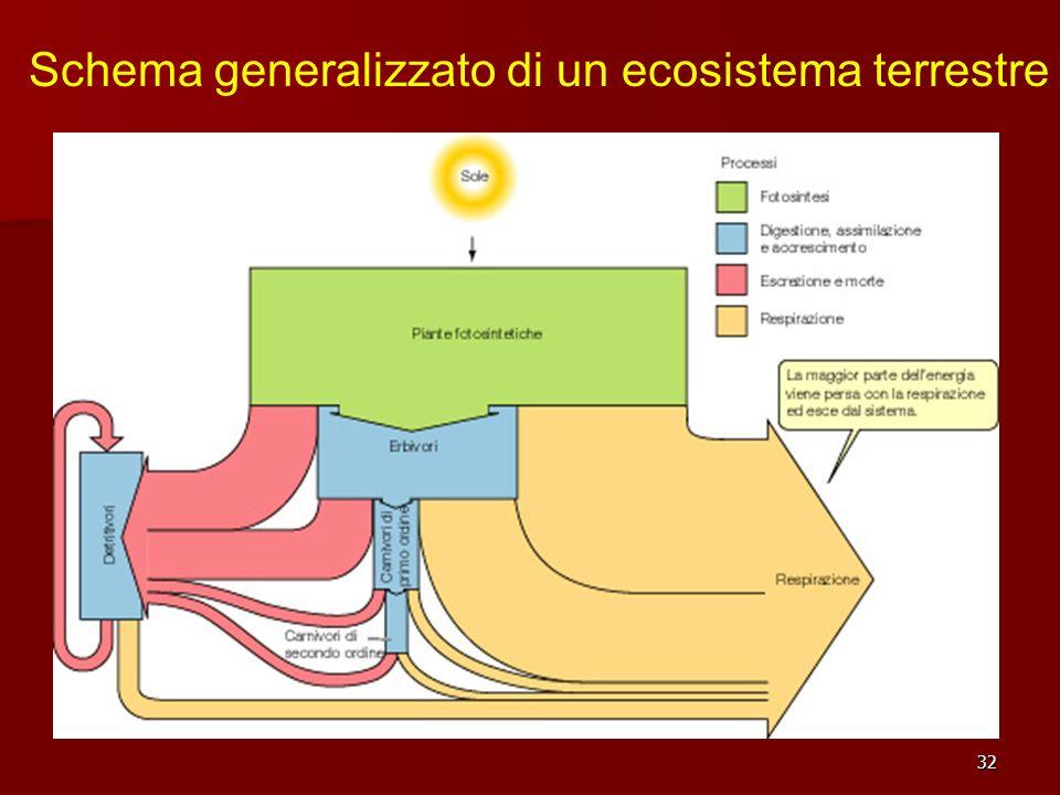 Schema generalizzato di un ecosistema terrestre