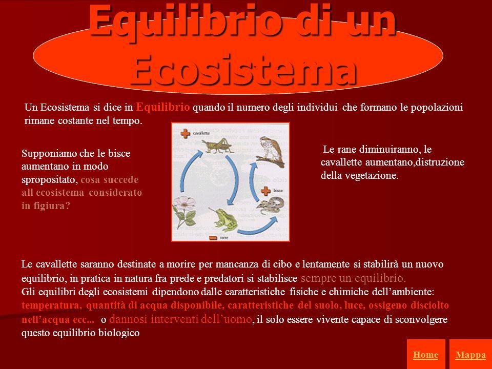 Equilibrio di un Ecosistema