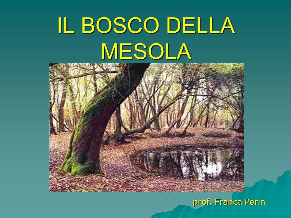 IL BOSCO DELLA MESOLA prof. Franca Perin
