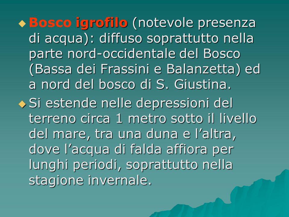 Bosco igrofilo (notevole presenza di acqua): diffuso soprattutto nella parte nord-occidentale del Bosco (Bassa dei Frassini e Balanzetta) ed a nord del bosco di S. Giustina.