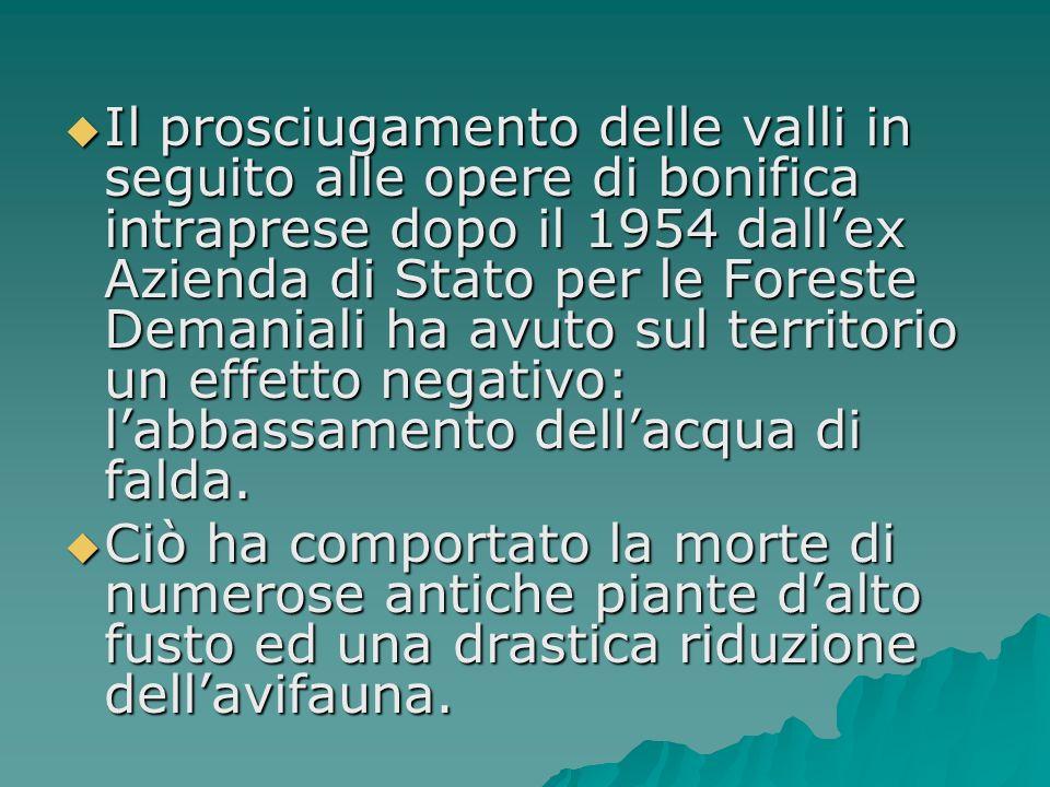 Il prosciugamento delle valli in seguito alle opere di bonifica intraprese dopo il 1954 dall'ex Azienda di Stato per le Foreste Demaniali ha avuto sul territorio un effetto negativo: l'abbassamento dell'acqua di falda.