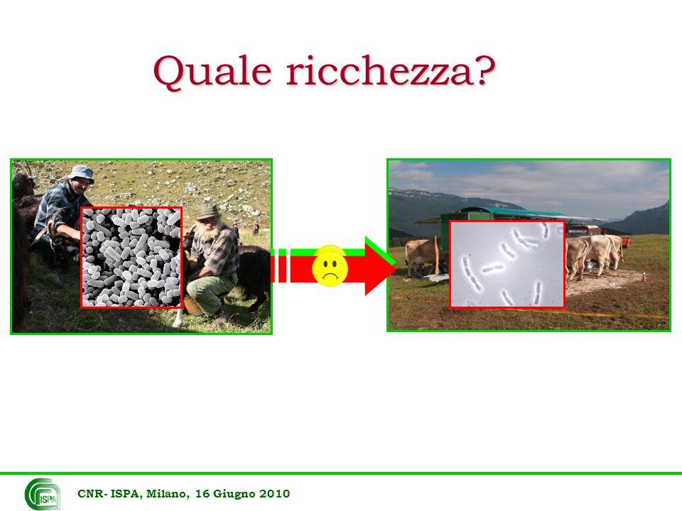 Quale ricchezza CNR- ISPA, Milano, 16 Giugno 2010