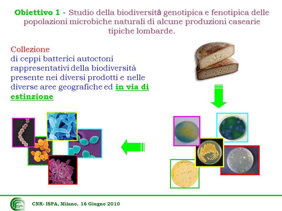 Obiettivo 1 - Studio della biodiversità genotipica e fenotipica delle popolazioni microbiche naturali di alcune produzioni casearie tipiche lombarde.