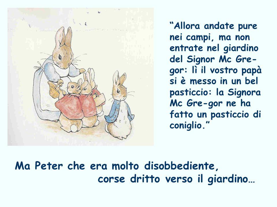 Ma Peter che era molto disobbediente, corse dritto verso il giardino…