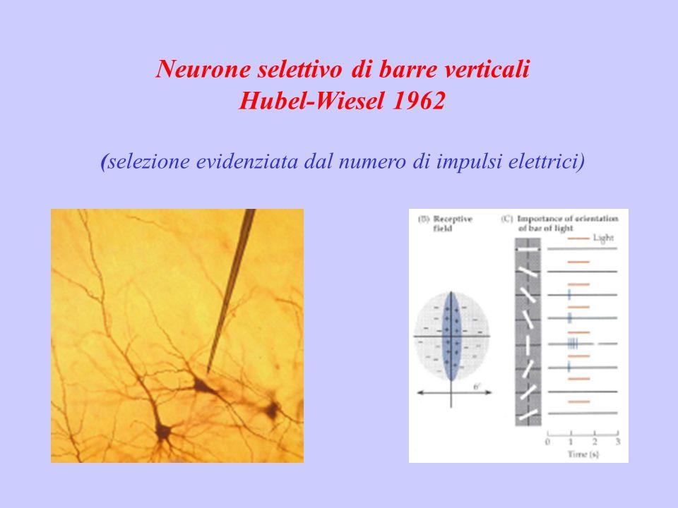 Neurone selettivo di barre verticali