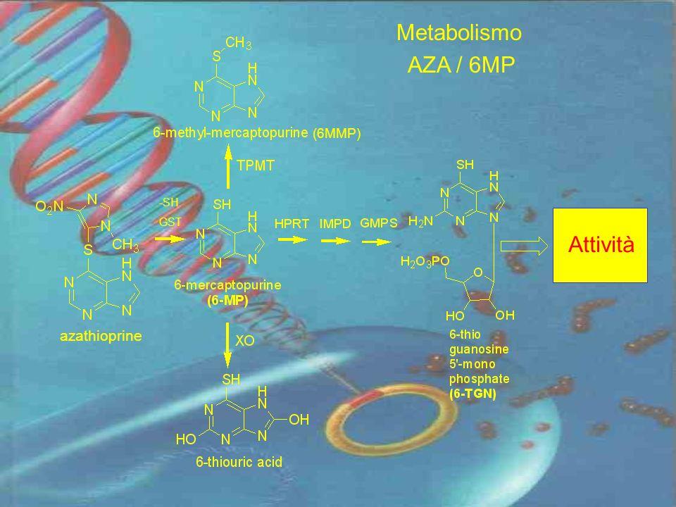 Metabolismo AZA / 6MP (6MMP) Attività -SH GST azathioprine