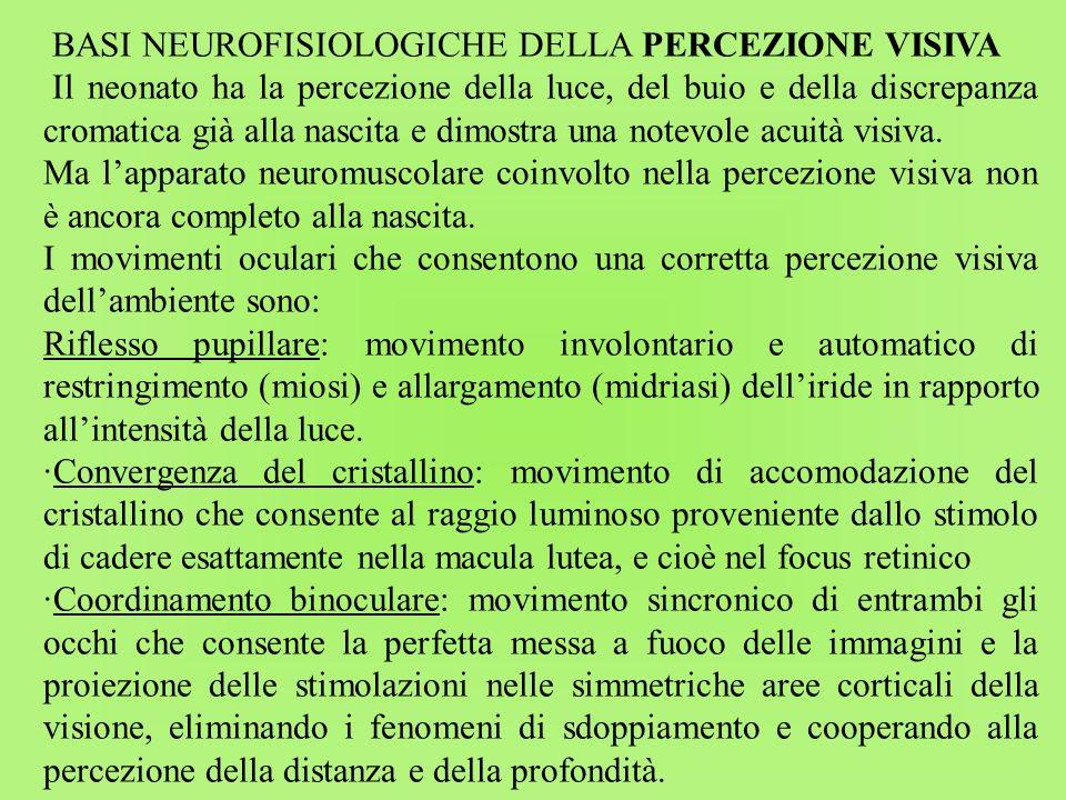 BASI NEUROFISIOLOGICHE DELLA PERCEZIONE VISIVA