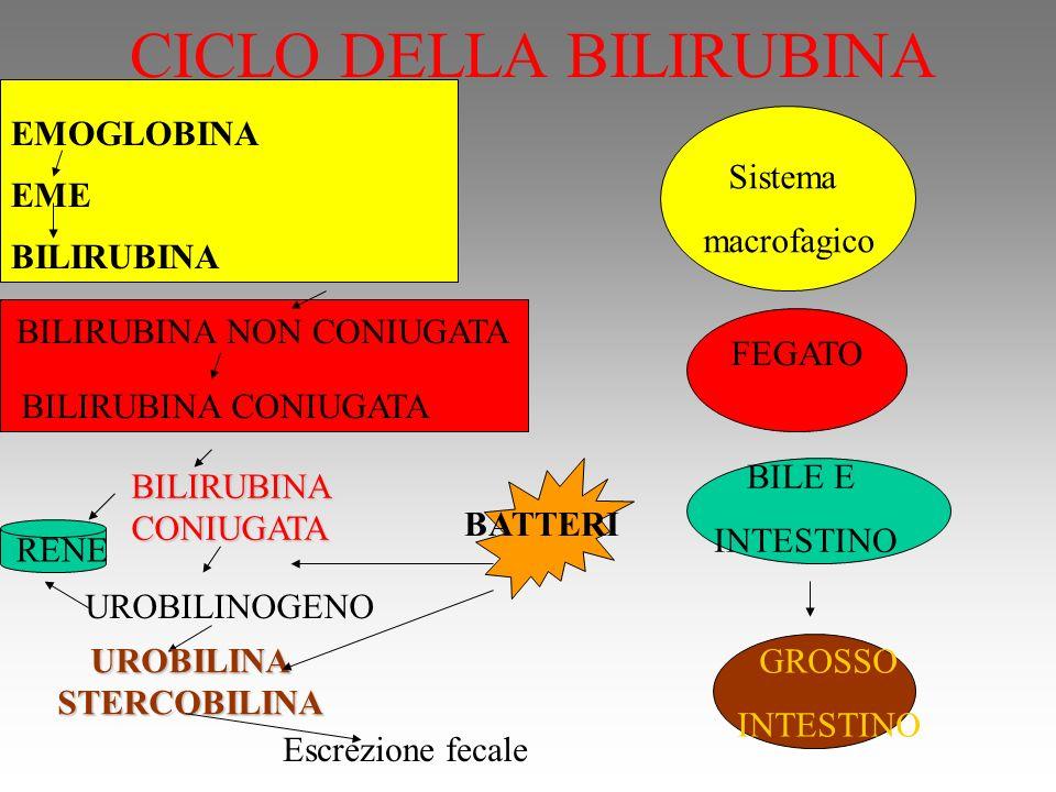 CICLO DELLA BILIRUBINA