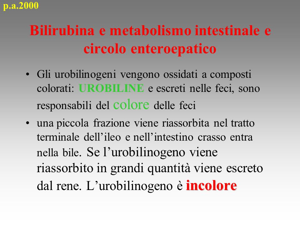 Bilirubina e metabolismo intestinale e circolo enteroepatico