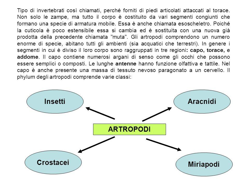 Insetti Aracnidi ARTROPODI Crostacei Miriapodi