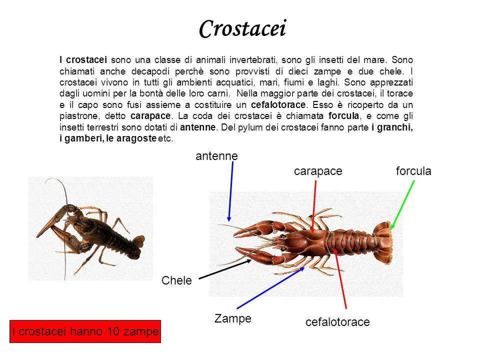 I crostacei hanno 10 zampe