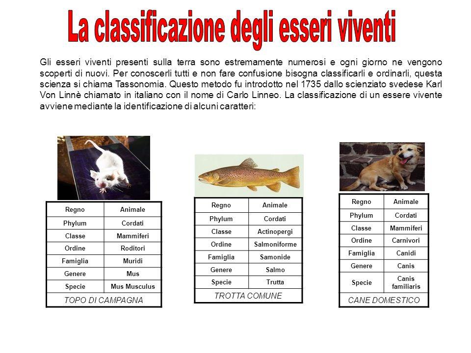 La classificazione degli esseri viventi