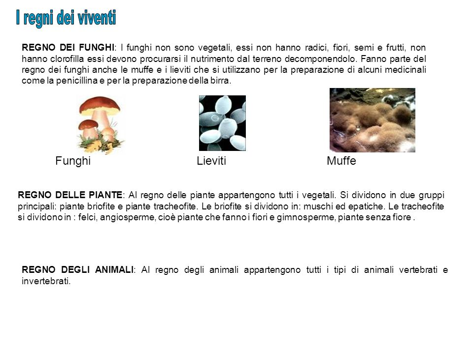 I regni dei viventi Funghi Lieviti Muffe
