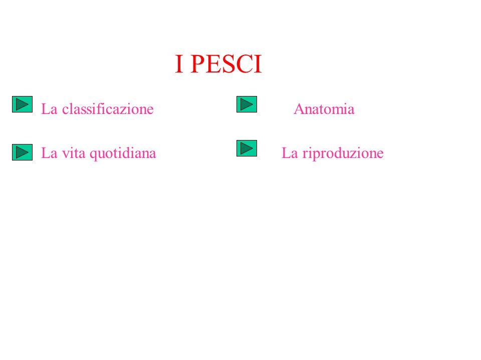I PESCI La classificazione Anatomia La vita quotidiana La riproduzione