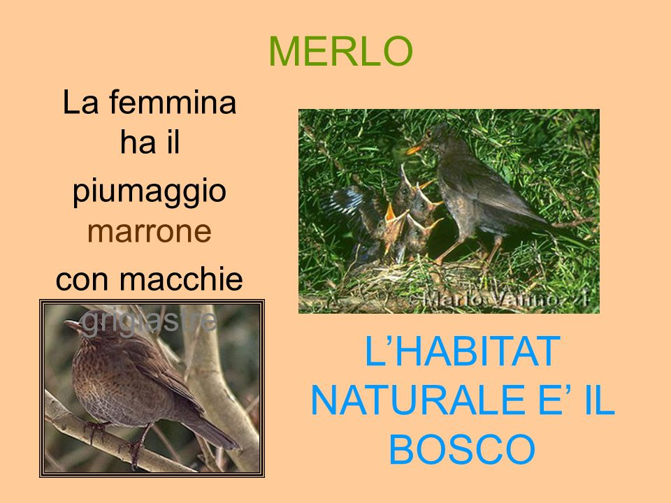 L'HABITAT NATURALE E' IL BOSCO
