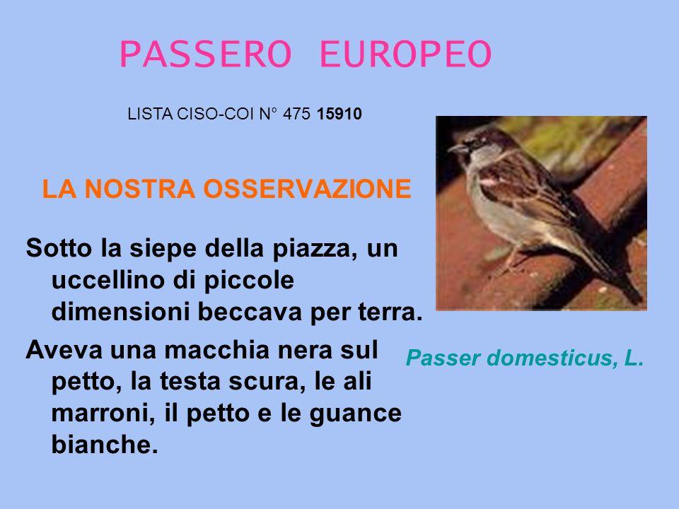 PASSERO EUROPEO LA NOSTRA OSSERVAZIONE