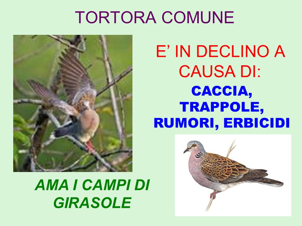 E' IN DECLINO A CAUSA DI: