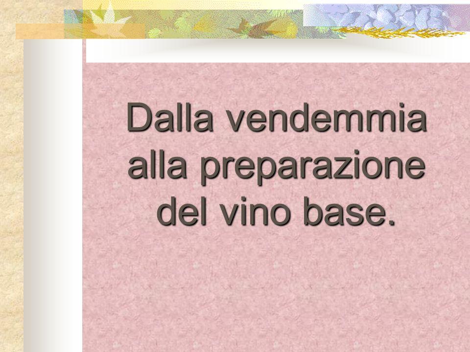 Dalla vendemmia alla preparazione del vino base.