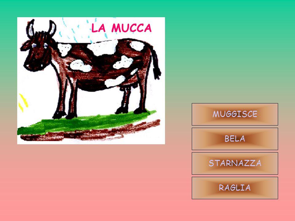 LA MUCCA MUGGISCE BELA STARNAZZA RAGLIA