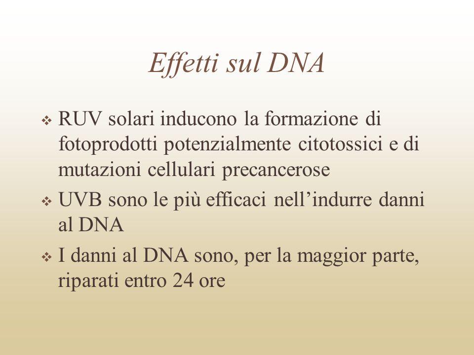 Effetti sul DNARUV solari inducono la formazione di fotoprodotti potenzialmente citotossici e di mutazioni cellulari precancerose.