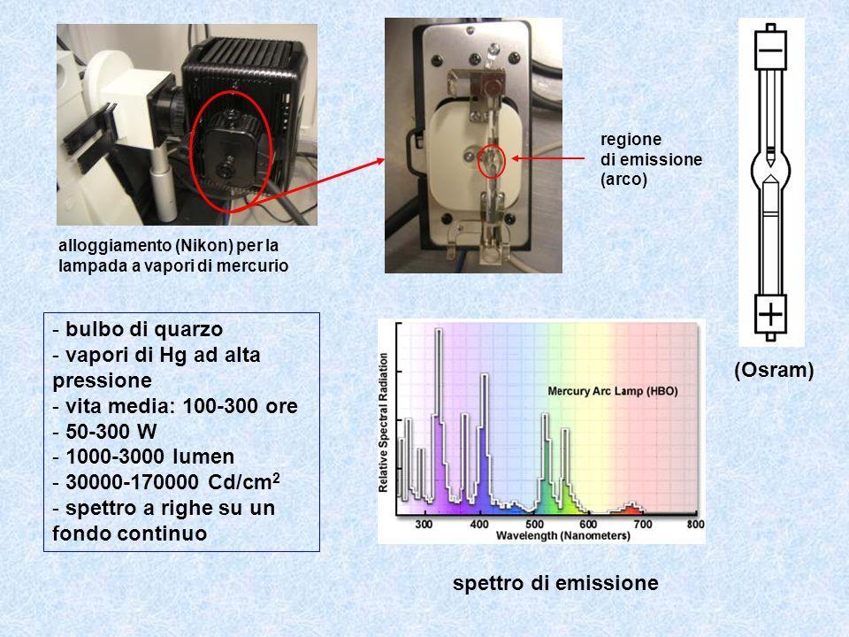 vapori di Hg ad alta pressione vita media: 100-300 ore 50-300 W