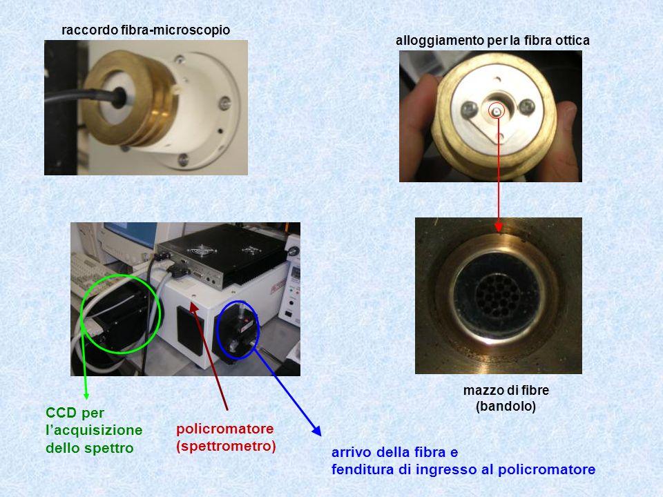 CCD per l'acquisizione dello spettro policromatore (spettrometro)