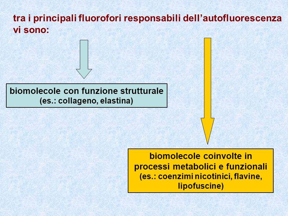 tra i principali fluorofori responsabili dell'autofluorescenza vi sono:
