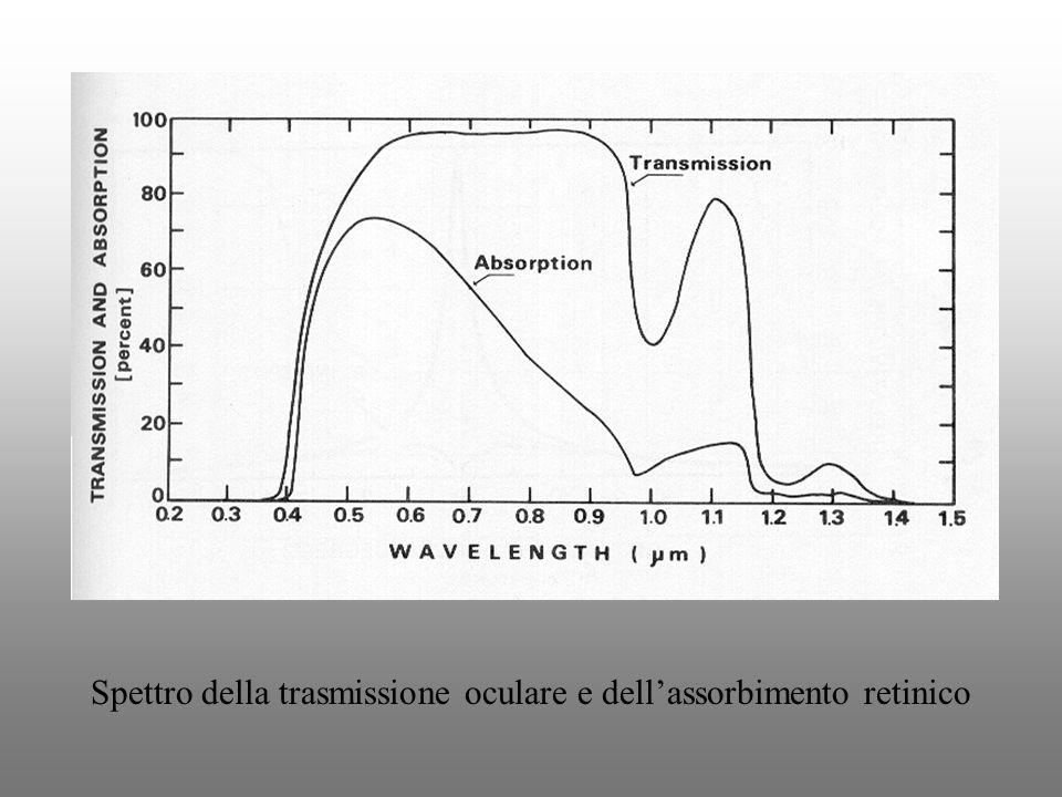 Spettro della trasmissione oculare e dell'assorbimento retinico