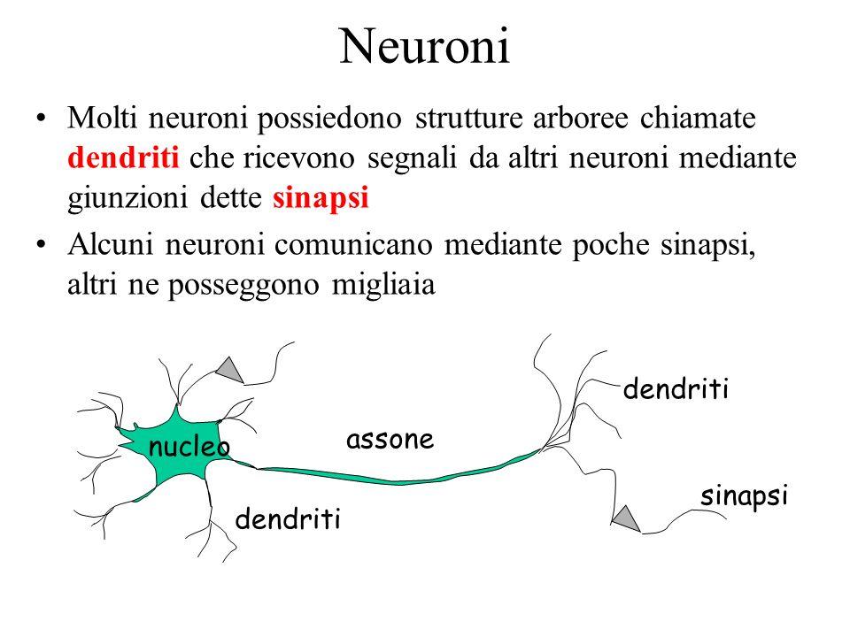 Neuroni Molti neuroni possiedono strutture arboree chiamate dendriti che ricevono segnali da altri neuroni mediante giunzioni dette sinapsi.