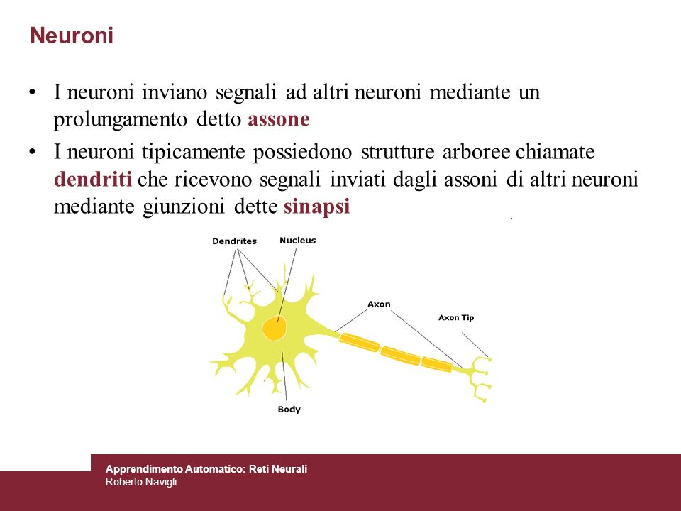Neuroni I neuroni inviano segnali ad altri neuroni mediante un prolungamento detto assone.