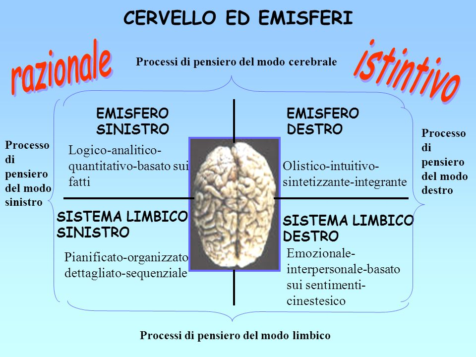 CERVELLO ED EMISFERI razionale istintivo EMISFERO SINISTRO