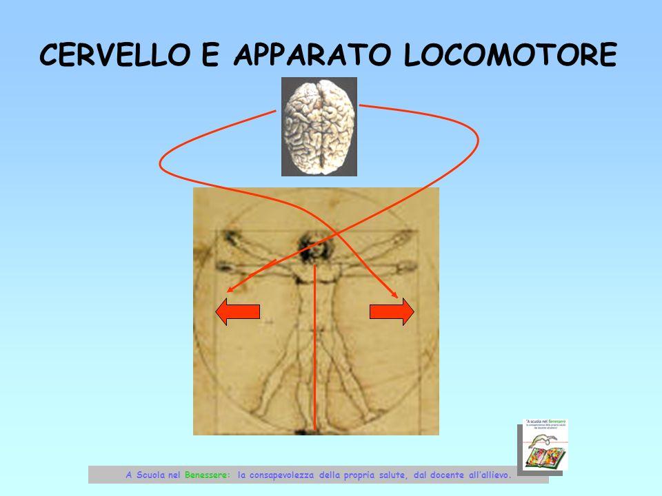 CERVELLO E APPARATO LOCOMOTORE