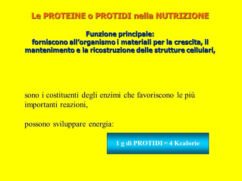 Le PROTEINE o PROTIDI nella NUTRIZIONE