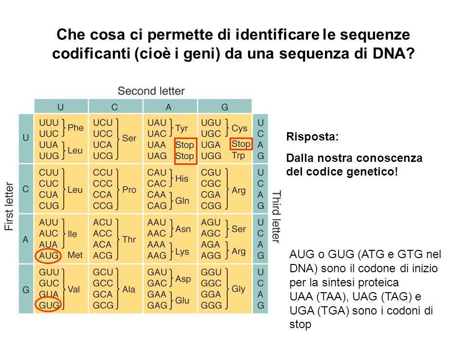 Che cosa ci permette di identificare le sequenze codificanti (cioè i geni) da una sequenza di DNA