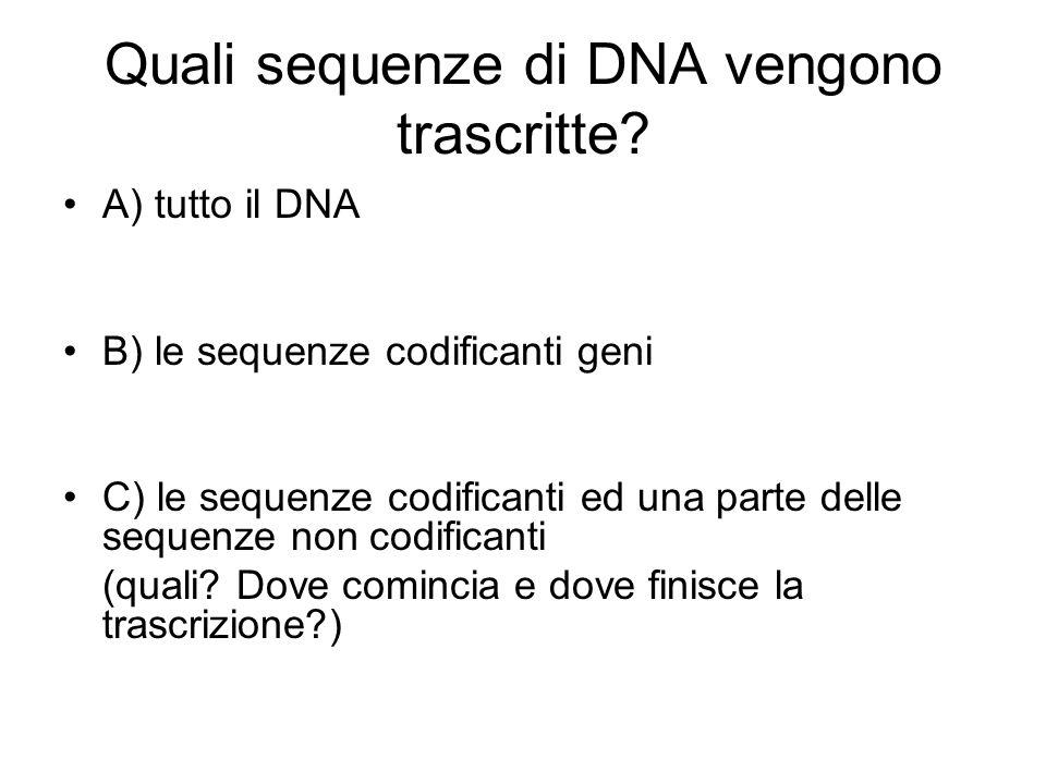 Quali sequenze di DNA vengono trascritte