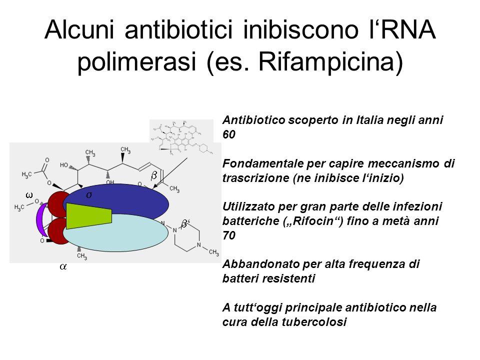Alcuni antibiotici inibiscono l'RNA polimerasi (es. Rifampicina)