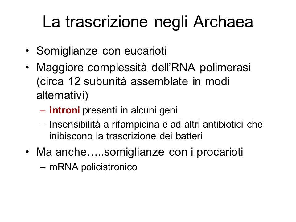 La trascrizione negli Archaea