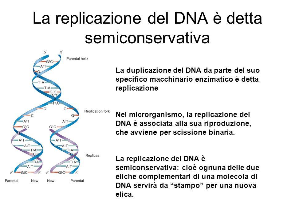 La replicazione del DNA è detta semiconservativa