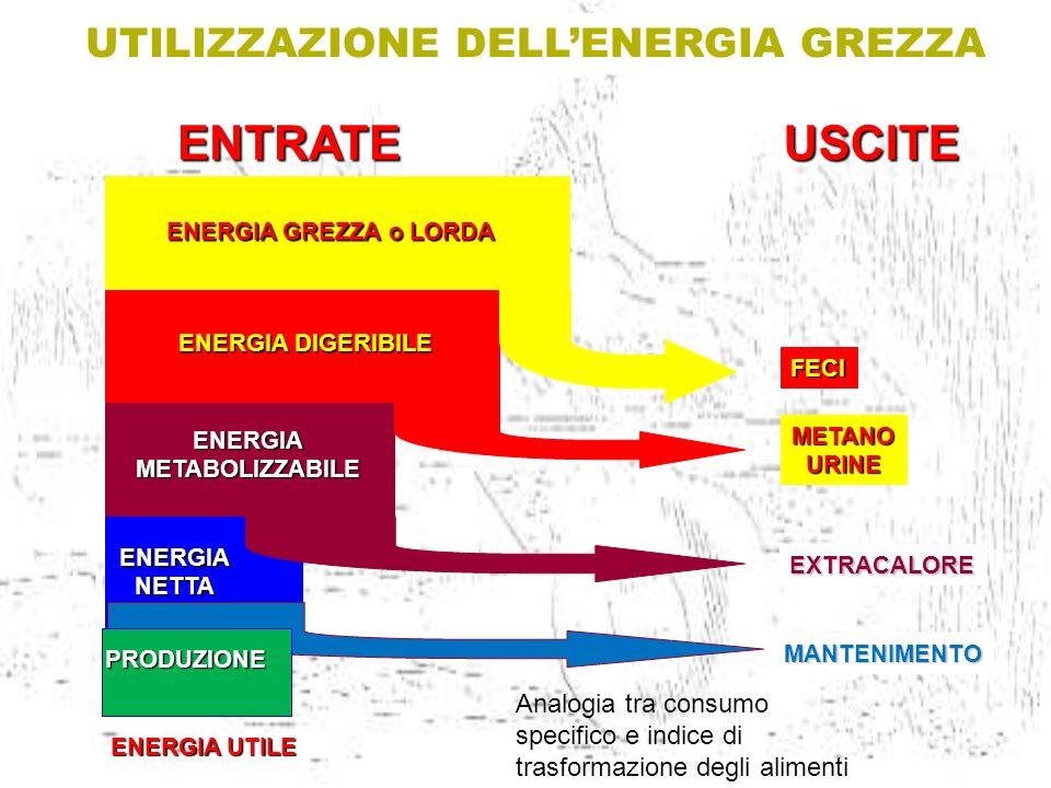 UTILIZZAZIONE DELL'ENERGIA GREZZA