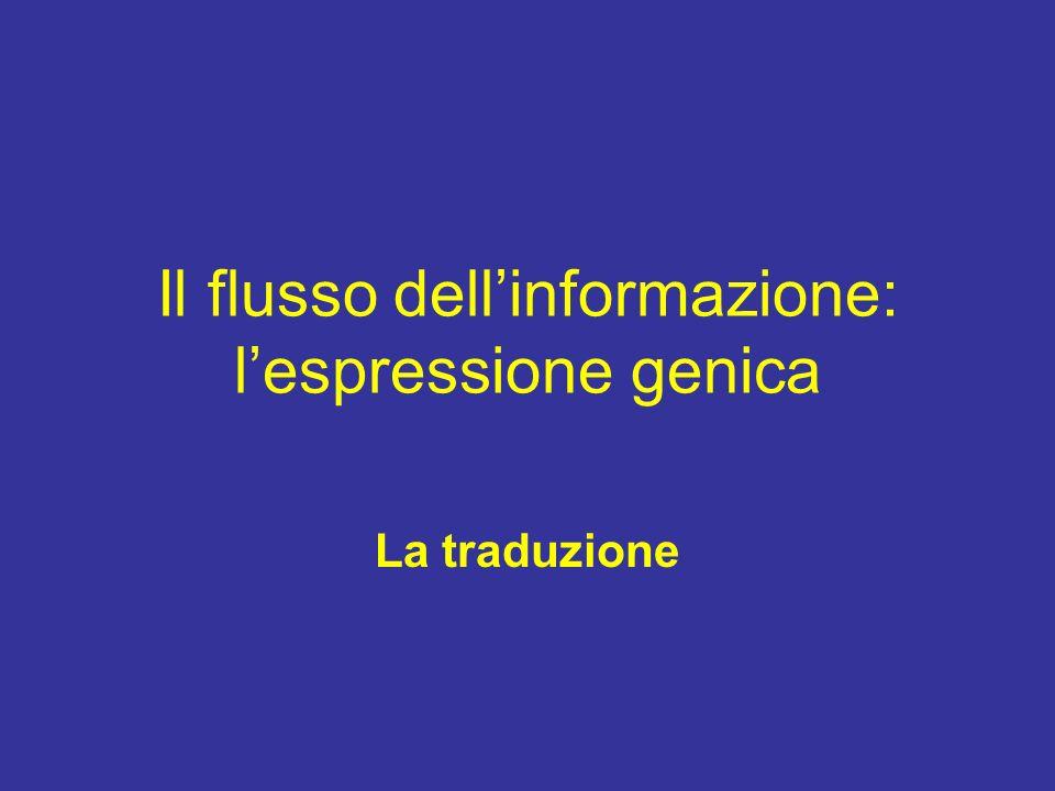 Il flusso dell'informazione: l'espressione genica