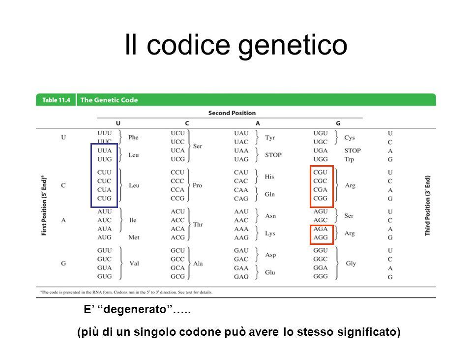 Il codice genetico E' degenerato …..