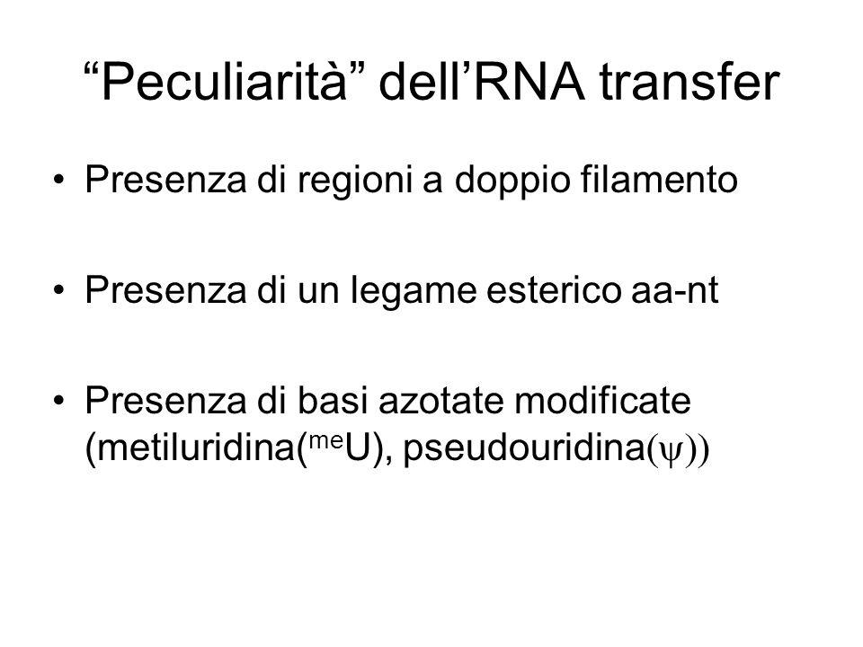 Peculiarità dell'RNA transfer
