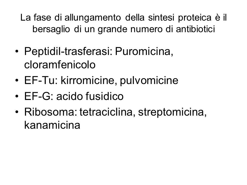 Peptidil-trasferasi: Puromicina, cloramfenicolo